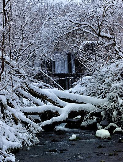 真冬の木谷沢渓流