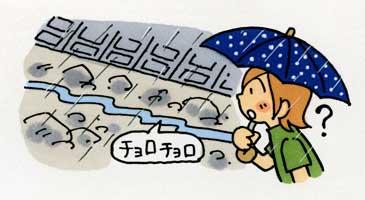 雨は降り続いているのに<br>川の水が減る②