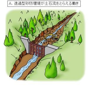 ④堰堤にたまった岩、土砂や流木は、次の土石流に備えて取り除きます。